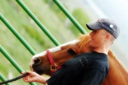 Volunteer for Front Range Hippotherapy